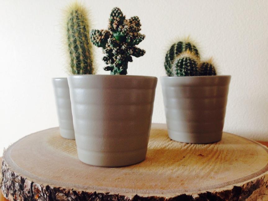 FullSizeRender cacti